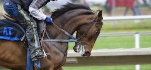 racehorse-419742_1280